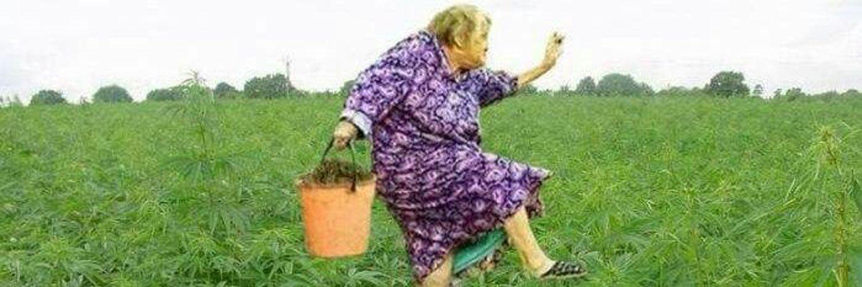 марихуаны передозировка